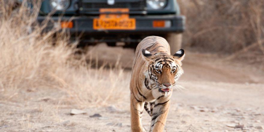 Viagem a rajastão Índia